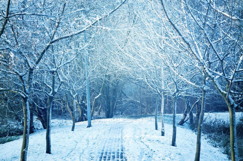 Chemin bordé d'arbres sous la neige en plein hiver